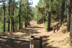 Camino La Crucita (3)