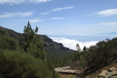 Camino La Crucita (8)
