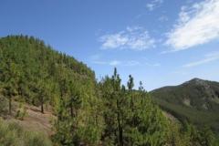 Camino La Crucita (9)